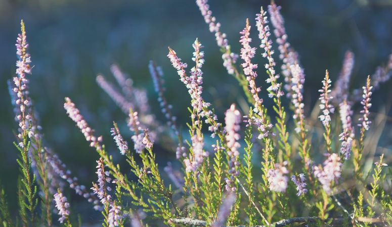 Lavender Essential Oil Benefits and uses. There are many reasons to keep lavender essential oil around. It's super calming, great with easing anxiety, can soothe burns and make skin look great!