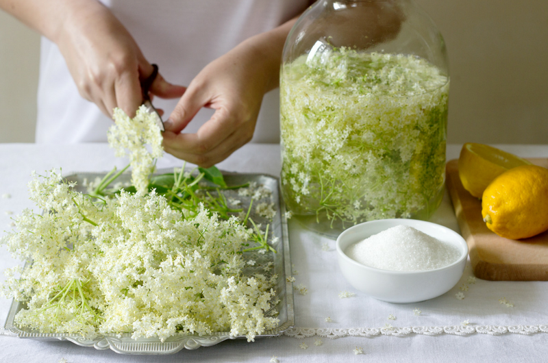 preparing elderflowers to be put in a homemade elder flower syrup.