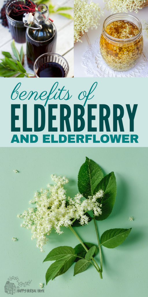 Elderflower and elderberry benefits and uses. Great for herbal medicine, and very useful for cold and flu season.