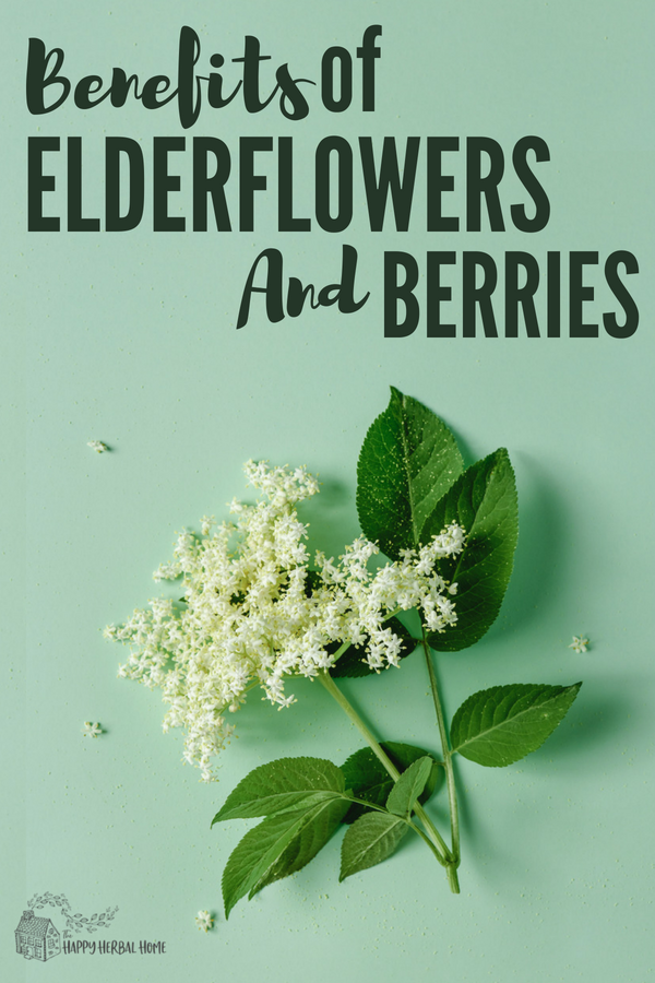 Benefits of elderflower and elderberry.