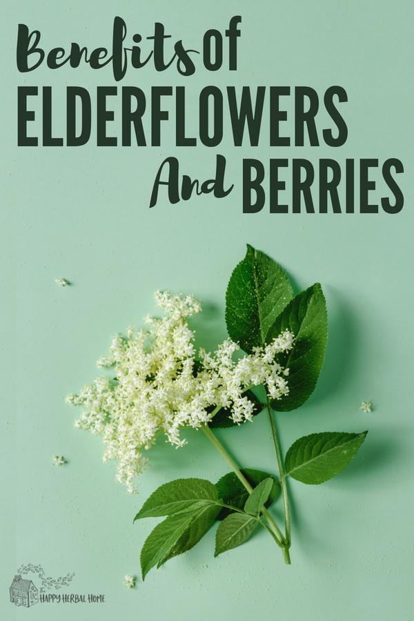 Benefits of elderflower and elderberry.